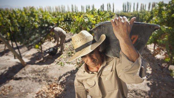 habra-una-jubilacion-diferencial-para-trabajadores-y-contratistas-de-vinas-y-frutales