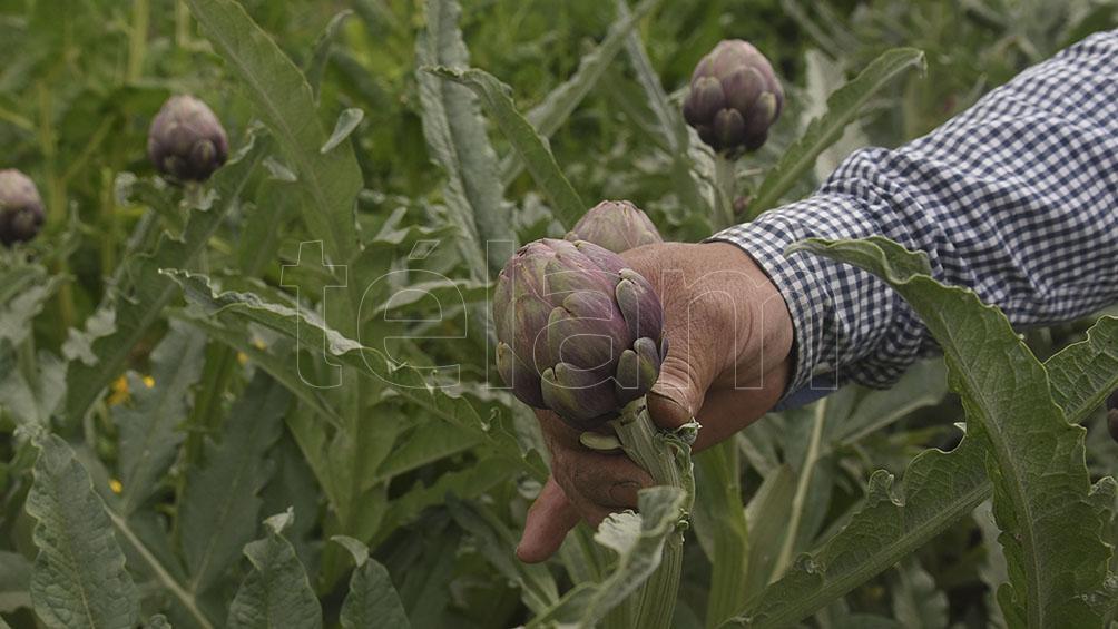 las-lluvias-traen-alivio-a-la-agricultura,-en-particular-a-los-cultivos-de-la-zona-nucleo